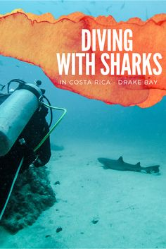 Ever thought about diving with sharks? There's a place in Costa Rica which will blow your mind!