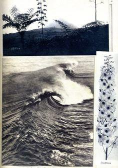 hannah höch. album c.1933