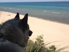 """The """"Dog Divide"""" - Traveling with a dog in an RV 