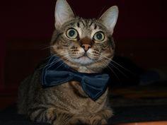 #Tom Cat #Puppy # #LoveAnimals #CanaryIsland #Winter #Christmas #MerryChristmas #BigBrother #MyMonster #Puppy #Pet