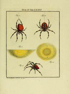 D.3,pt.2 - De natuurlyke historie der insecten; 1768