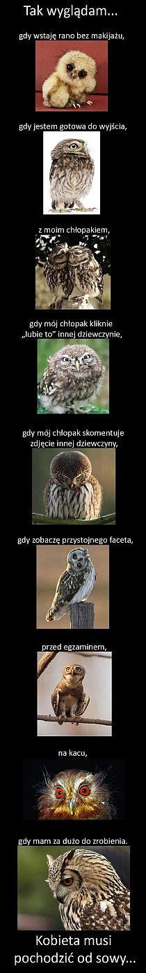 Kot wąchający cuchnący ser - KWEJK.pl - najlepszy zbiór… na Stylowi.pl Humor Videos, Humor Grafico, Wtf Funny, Make Me Happy, Haha, About Me Blog, Jokes, Dead Pool, Meme