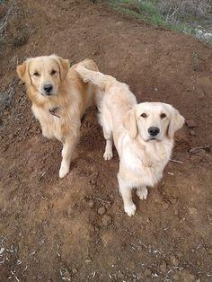 Bo & Lola