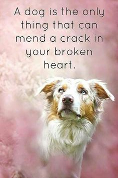 A piece of my heart goes with each of my pets. Each new pet mends the crack.