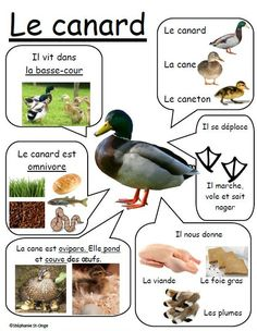Fiche canard cette fois-ci!! Animal Crafts For Kids, Animal Projects, How To Speak French, Learn French, Teaching Kids, Kids Learning, French Education, French Classroom, French Resources