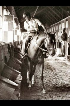 Secretariat with my friend, Jim Gaffney aboard All The Pretty Horses, Beautiful Horses, Thoroughbred Horse, Dressage, The Great Race, Triple Crown Winners, Sport Of Kings, All About Horses, Racehorse