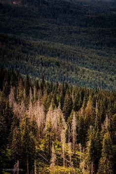 Zdjęcie: Babia Góra National Park, Poland  #poland #beskidy #polandisbeautiful #macieksulkowski