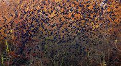 Carolyn Marks Blackwood's Amazing Photographs Of Flocks Of Birds