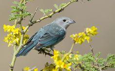 bird, feathers, beak, branch, flowers,