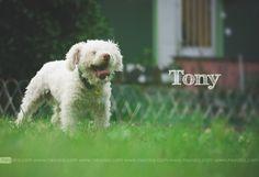 Tony, dog, perro