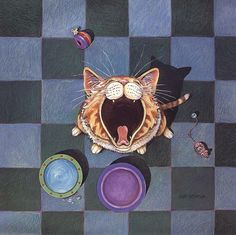 Cat picture gary patterson solo white hair 800x799 en 6512