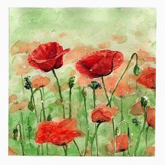 watercolor poppies ♥