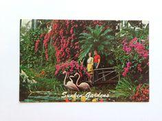 Vintage Sunken Gardens St Petersburg FL Postcard Posted  Looks Like 1969