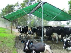 Moveable fabric shade structure for grazing cows.