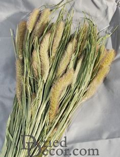 Use some Foxtail millet for enhancing your decorations this year. Try some in a centerpiece or wall arrangement.