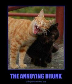 Check out all our Annoying Drunk Cat funny pictures here on our site. We update our Annoying Drunk Cat funny pictures daily! Silly Cats Pictures, Cute Animal Photos, Funny Photos, I Love Cats, Crazy Cats, Cute Cats, Drunk Cat, Funny Cute, Hilarious