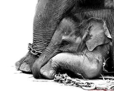 BAN THE CIRCUS, their lives aren't worth the ticket to see cruelty. REPIN THIS