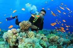 tropical scuba diving - Google Search