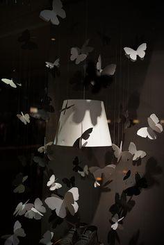 Butterflies #photography