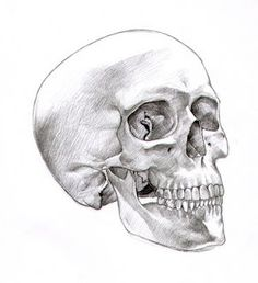 vintage skull 1 by beinspyred on deviantart my vintage ephemera