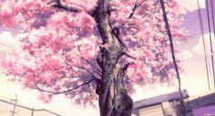 Sakura gif