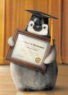 Penguin Chick Graduation Card