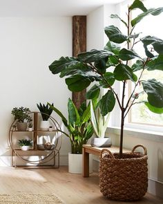 94 indoor plants design in your interior make your home more beautiful 14 ~ aacmm com is part of Plant decor indoor - 94 indoor plants design in your interior make your home more beautiful 14 Living Room Plants, House Plants Decor, Plant Box, Diy Plant Stand, Plant Basket, Best Indoor Plants, Indoor Planters, Wall Planters, Big Plants
