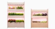 Click & Grow allows anyone to grow plants with their wall farms system. I want one