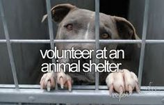 volunteer. when i'm not working two jobs - i am so going to do what i can for furbabies