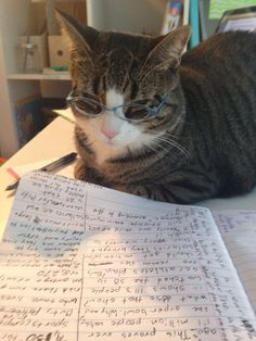 My cat is so funny she's smart Study Hacks, Study Tips, Honey Bunny, Study Notes, Hilarious, Funny, Cute Cats, Brave, Creatures