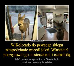 In Colorado, a deer came to a store unexpectedly. The owner offered him cookies and chocolate - Deer then went out and after 30 minutes he showed up with all his family<< you're welcome fellow English speakers Very Funny Memes, Wtf Funny, Funny Animals, Cute Animals, Polish Memes, Weird Facts, Reaction Pictures, Pranks, Best Memes