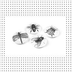 Insecten magneten van glas Cufflinks, Stud Earrings, Accessories, Jewelry, Jewellery Making, Earrings, Jewels, Ear Gauge Plugs, Jewlery