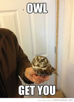 Owl Get You! Haha! Very Punny guys!