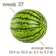 Carrying Baby Carriere: 37 Weeks