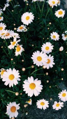 Flores-Fondo                                                                                                                                                                                 Más