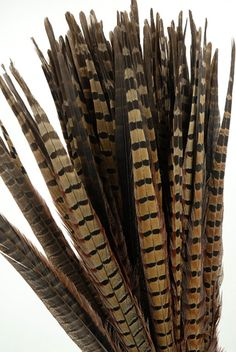 Bring the earthy essence of a quaint countryside to your home decor with these regal fronds. The Pheasant Feathers can be added to rustic floral arrangements, or be displayed by themselves. Add eye-catching layers of texture to your home by placing the