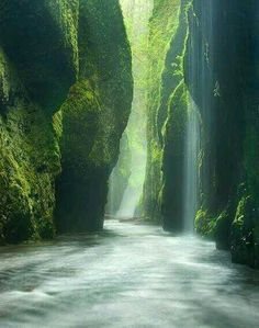 Rainforest Canyon, Oregon, USA