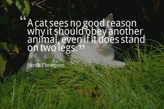 A cat sees no good reason why it should obey another animal even if it does stand on two legs.- Sarah Thompson #dogs #cats