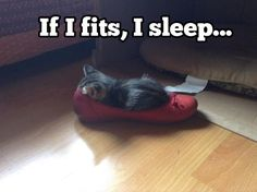 What crazy things have you found your cat or kitten squeezing themselves into? Or what improbable place have they fallen asleep? This one is a pretty tight squeeze and can't be that comfortable for sleeping – the kitten doesn't care though!