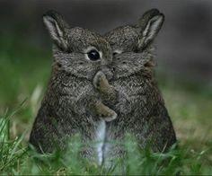 whispering bunny secrets -- that's so cute  -m-