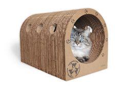 diseño para gatos