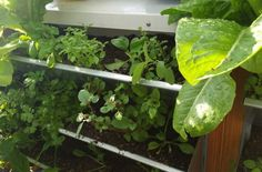 backoffice&more - Projekte - Nahversorgung Region Elsbeere Wienerwald - vertical gardening Celery, Gardening, Vegetables, Projects, Lawn And Garden, Vegetable Recipes, Veggies, Horticulture
