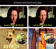 """[gifset] """"I learned very quickly that Jensen and Jared, first of all, they're very good friends and that's where the chemistry comes from. But they're also kind of unique. If they were dogs, Jensen would be Rin Tin Tin and Jared would be Pluto. And they just genuinely like each other. Well, that comes off on the screen""""  ‒ Kim Manners"""