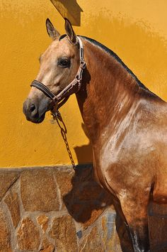 Horsespre | Horses for sale