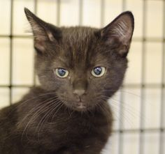 Puma was adopted on 11/21/14!