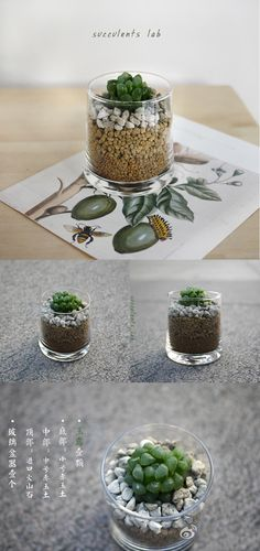 How cute for a table decoration and guest gift!  succulent in glass cup