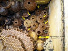 Meliponário Aracruz: Cera Artificial Para Abelhas Sem Ferrao