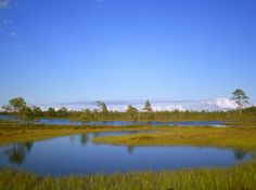 Kauhaneva swamp, Finland. Photo by Jussi V. -- National Geographic Your Shot