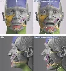 Resultado de imagem para anatomy next