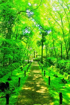 lifeisverybeautiful:  Banboo Temple, Kyoto, Japan via αcafe My Sony Club